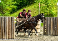GMHA Combined Driving Test & Arena Driving Trials